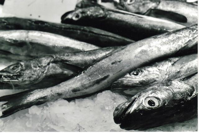 Diferencia entre pescado blanco y azul | Cocina.