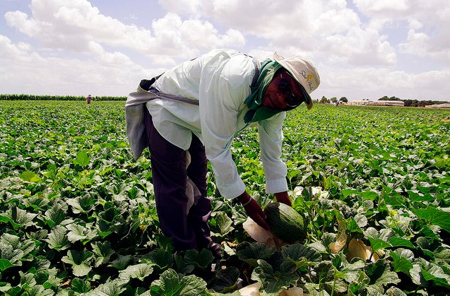 Qu es la agricultura ecol gica for Rotacion cultivos agricultura ecologica