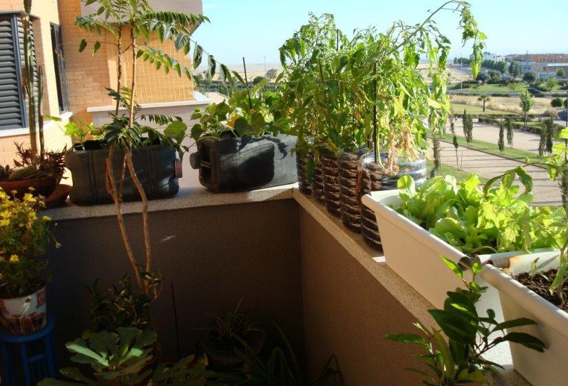 Huerto casero en la terraza
