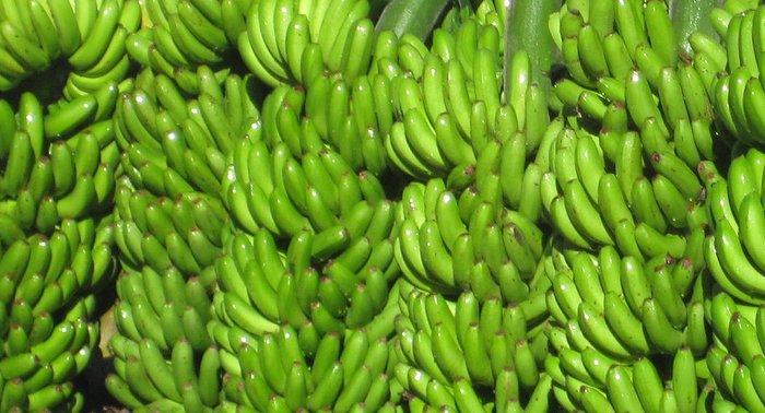 Piñas de plátanos o bananas verdes
