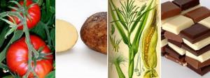 Alimentos venidos de América: tomate, patata, maíz y chocolate.