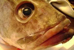 Un pescado esperando a su comprador en la pescadería