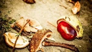 Las castañas, uno de los frutos emblemáticos del otoño