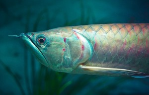 Pescados en peligro de extinción