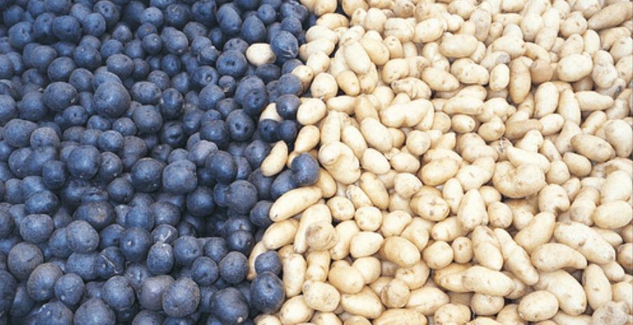 patatas azules y patatas blancas