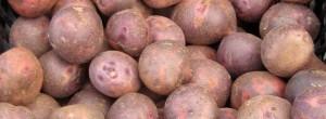patatas potatoes papas