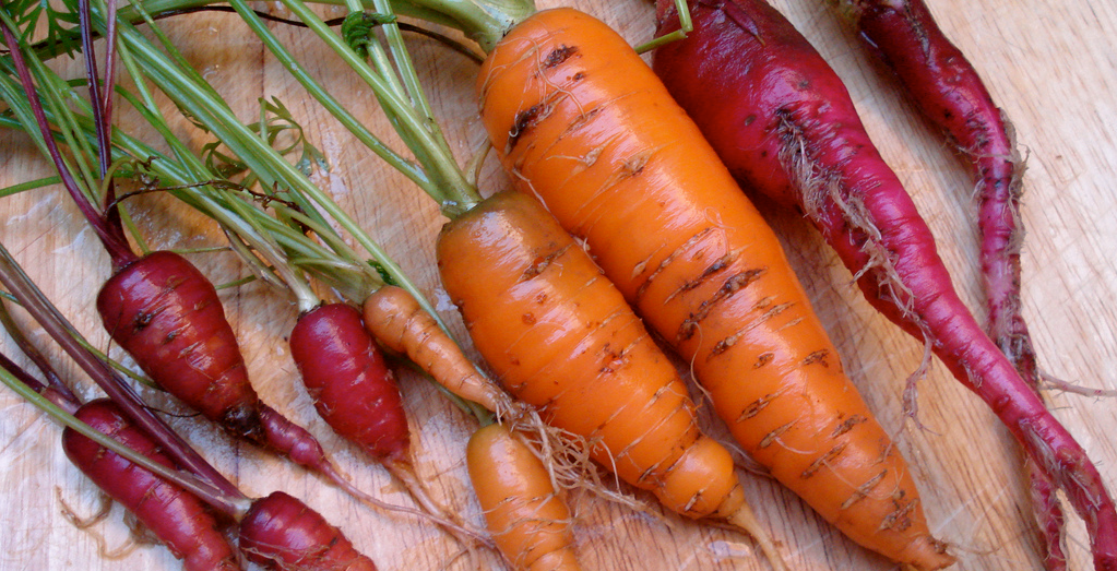 Zanahorias moradas y naranjas
