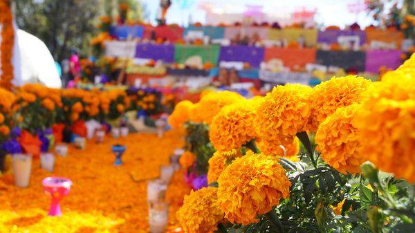 Flores de Cempasuchil en el día de muertos